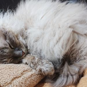 【猫のシャンプー】ペットドライルームを使った感想