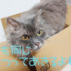 猫に錠剤飲ませるのが下手な私が、1日3回の錠剤を与えられた理由