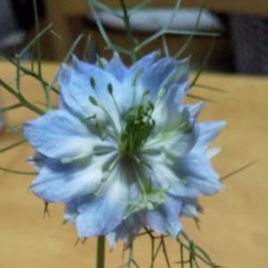 【お花のある生活】が似合う部屋にしたい