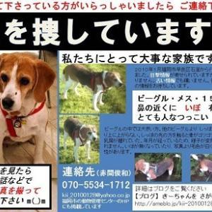 きーちゃんという犬を探してます。