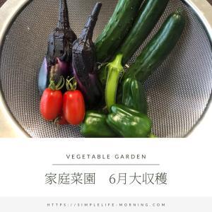 【はぐくむ】スローライフ:ベランダ家庭菜園~梅雨に負けず大収穫~