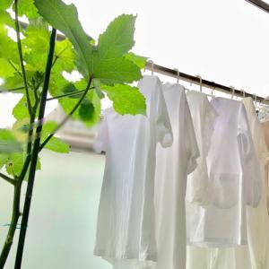 【オキシごと15分】白い衣類の白さをキープ!2週に一度のオキシ漬け♪