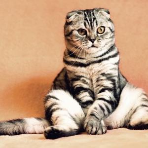 やっぱり猫が・・・好きじゃない