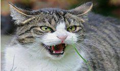 自宅に招いた友達がラーメン食べたいと言うのでケトルでお湯を沸かし始めたらドヤ顔で「ラーメン食いたいって言ったよねw」と言ってきた→何言ってんだ?と思ってたら…