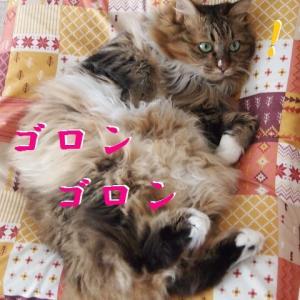 猫のためならエンヤコラ。