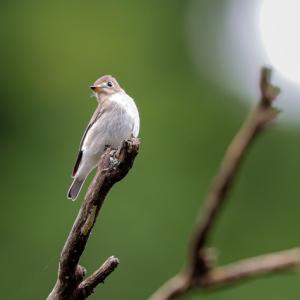 お山の小鳥