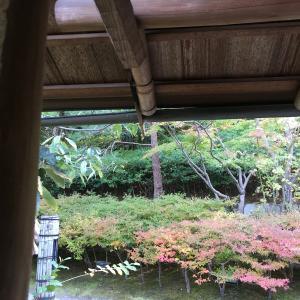 楓を見る会
