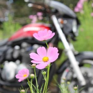 旬な花巡り