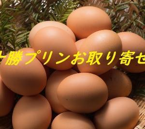 おうち時間を癒す十勝プリン!酪農王国スイーツ特集【お取り寄せグルメ】