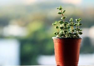 【観葉植物のメリット】部屋に置くだけ心の癒す品種の選び方