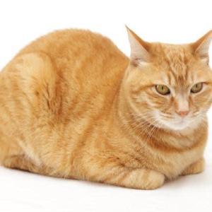 海道 遠「日本正座協会小説」 猫の香箱座りをいたしましょ