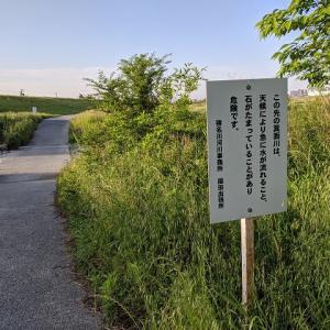 通勤途中のセントラルドグマ(猪名川サイクリングロード)