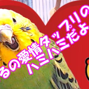 るるとぷぷのハミハミ~😍💕