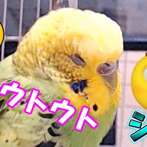 ホッコリるるちゃん(*´艸`*)