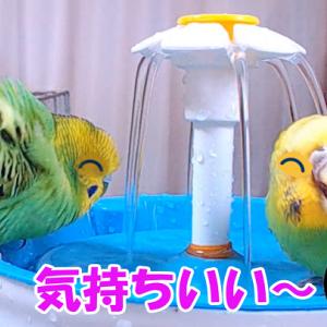水浴び「半端ないって!」今年はww