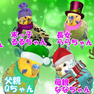 Qちゃん家族のクリスマスと止まり木カジリにハマる ららちゃんww