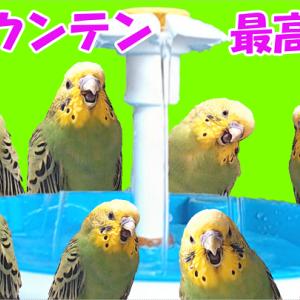 真冬でも水浴び~🎵😄
