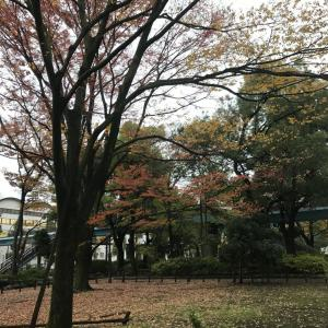 2019.11.26一日一季語 冬木(ふゆき)  【冬―植物―初冬】