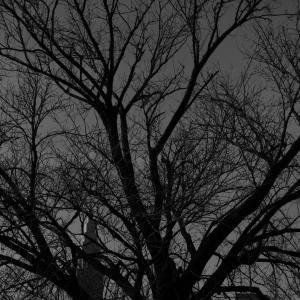 2020.1.20一日一季語 枯木(かれき)  【冬―植物―三冬】