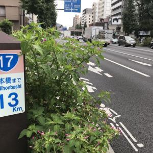 2020.9.20一日一季語 白粉花(おしろいばな)  【秋―植物―仲秋】