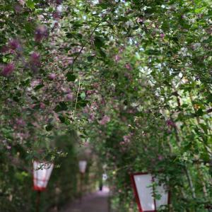 2020.9.24  一日一季語 萩(はぎ)  【秋―植物―初秋】