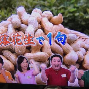 2020.9.30 一日一季語 落花生(らっかせい《らくくわせい》)  【秋―植物―晩秋】