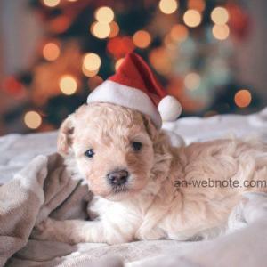 子なし夫婦のクリスマス 2019 〜何してたっけ?〜