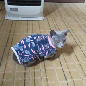 猫の避妊手術後に起きた事件?