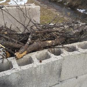 庭の整理@剪定枝の焼却
