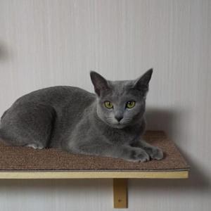 今日はウチの猫の1歳の誕生日です。