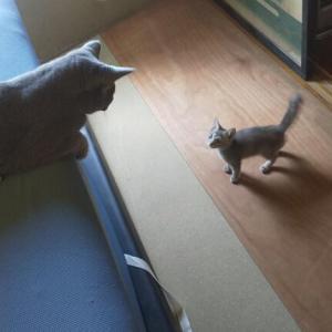 新入り猫のケージの扉を開け放った結果