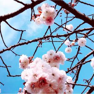 春は別れと出会いの季節