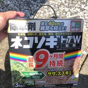 『除草作業に粒剤を使ってみる( `ー´)ノ』