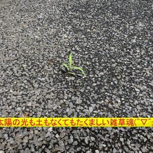 『8月から本格的に除草始動(=゚ω゚)ノ』噴霧機購入(^^)