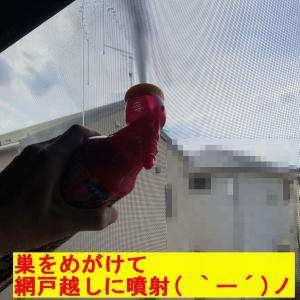 『ハチの巣撃退( `ー´)ノ』ビビりすぎる私(^▽^;)