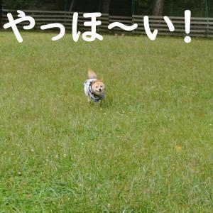 楽しい夏休み