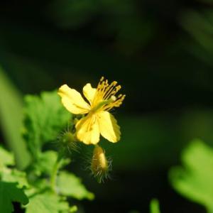 いま咲いている雑草