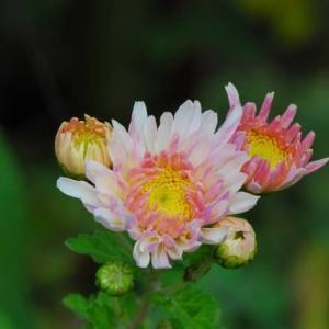 10月・咲いている花