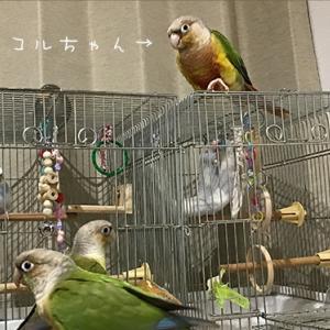 日本一のラーメン消費