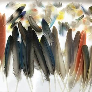 みんなの羽根収集