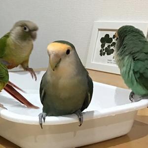 水浴びで大騒ぎ