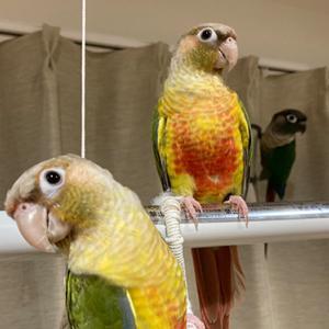 鳥たちは涼しい部屋でお留守番