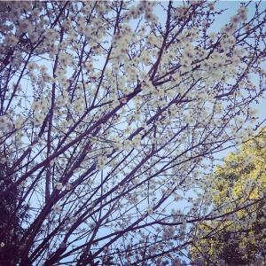 春間近(かな?)
