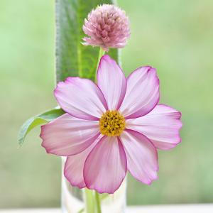 窓辺の花たち