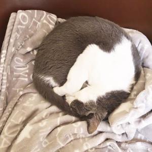 きょうはこのベッド