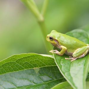 庭のカエルさん