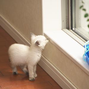 保護猫 きょうの探検