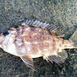 第19回 危険な毒魚を知って楽しい釣りをしよう!