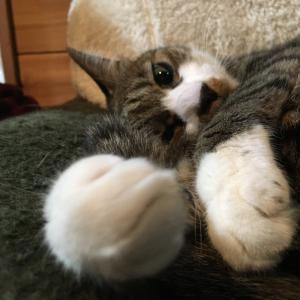 ぴーちゃん久し振りにソファーで寝る