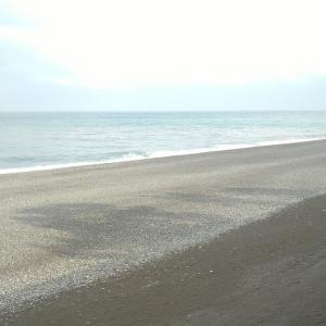 七里御浜 ヒラの居る所は❓ドコですか❓